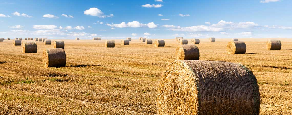 Bales-in-field-sustainable-Futures